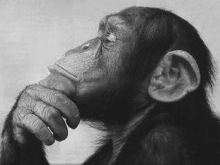 pensions_monkey