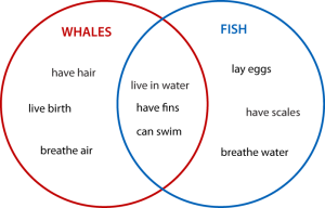 Whales and Fish